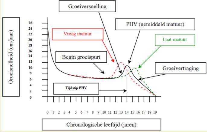 Het verschil in ontwikkeling qua groeisnelheid tussen laatbloeiers en vroegbloeiers